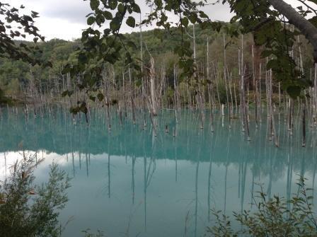 連休中は渋滞に要注意、美瑛の青い池
