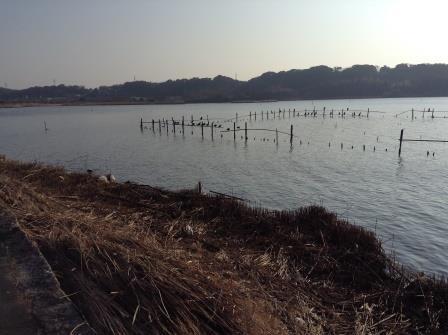 日本一汚い湖、佐鳴湖