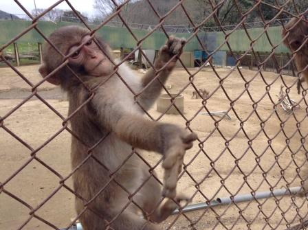 千葉にある猿だらけの動物園、高宕山自然動物園!
