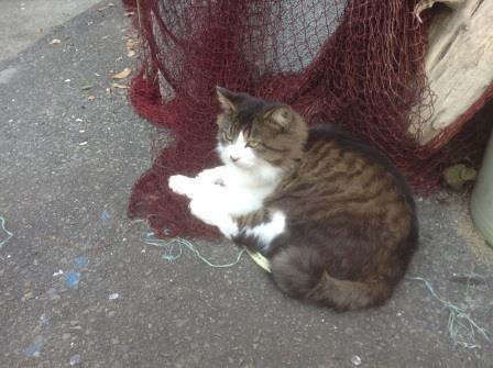 宮城県にある猫だらけの島「田代島」