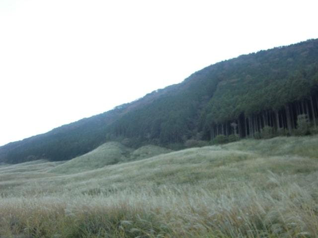 仙石原ススキの草原
