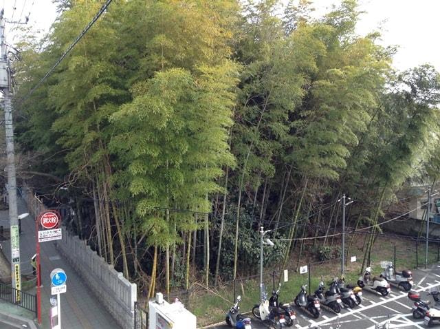 yabushirazu05