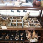 神奈川県にある珍古物店「うみねこ博物堂」はマニアック商品多数の訪れる価値がある店だ!