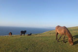 【日本で唯一】半野生馬が放牧される宮崎県最果ての地「都井岬」は、超絶景が広がる秘境だ!
