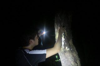 静岡県伊豆でのクワガタ採集激闘記!多種にわたるクワガタをゲットせよ~2018年ver