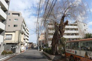 弁護士に騙された!?舟運で栄えた千葉県松戸市にあった「平潟遊郭」が迎えた結末とは!